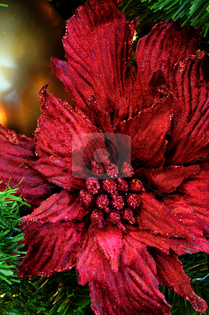 Poinsettia Christmas Tree Decoration stock photo, A Red Poinsettia christms holiday tree ornament with sparkeling glitter by Lynn Bendickson