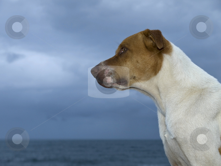 Sentinel stock photo, It is about to rain, but the dog stands guard by the coast. by Ignacio Gonzalez Prado