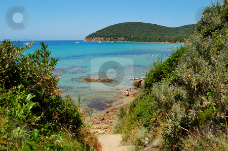 Trail to the beach stock photo, Trail to the beach (Cala Violina, Tuscany Italy) by ALESSANDRO TERMIGNONE