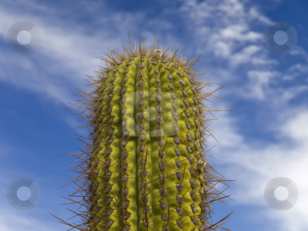 Green cactus stock photo, A green cactus over a blue sky with clouds. by Ignacio Gonzalez Prado