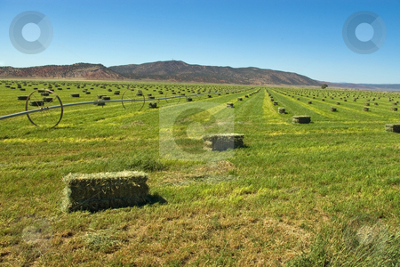 Hay Harvest stock photo, Bright green hay field with bales ready for stacking. by Andrew Orlemann