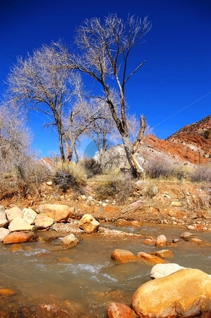 Winter Cottonwoods stock photo, Cottonwood trees along the bank of a desert river in winter. by Andrew Orlemann