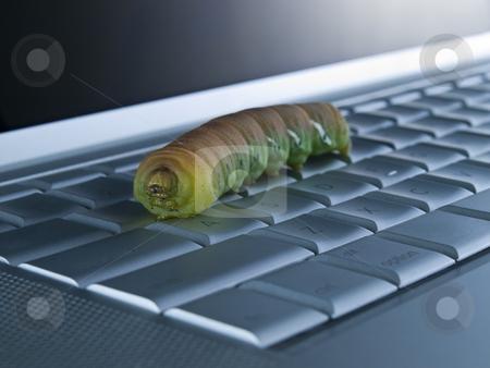 Computer bug stock photo, Macro shot of a caterpillar over a computer keyboard. by Ignacio Gonzalez Prado
