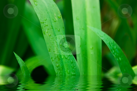 Green grass stock photo, Green grass with water drops on it by Dmitry Rostovtsev