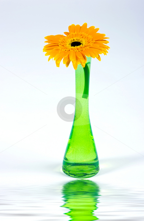 Decorative flower isolated on white stock photo, Decorative flower in glass vase isolated on white background by Dmitry Rostovtsev