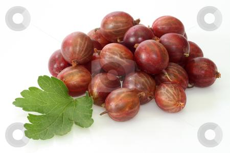 Gooseberry stock photo, Fresh Berries of gooseberry on a bright background by Birgit Reitz-Hofmann