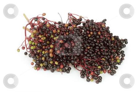 Elderberries stock photo, Closeup detail of ripening elderberries on a white by Birgit Reitz-Hofmann