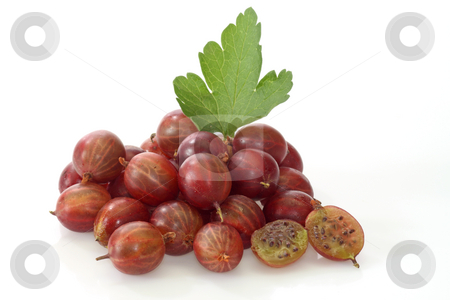 Gooseberry stock photo, Fresh Berries of gooseberry on a bright background by Birgit Reitz-Hofmann
