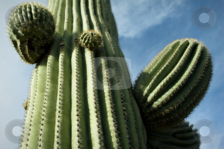 Towering Saguaro, Tucson, Arizona stock photo, Nice saguaro detail in Saguaro National Monument, Tucson, Arizona. Sauaro detail against interesting sky. by Jeff DeMent