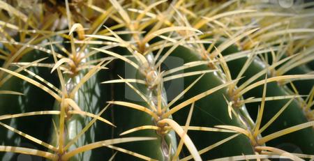 Barrel Cactus in Desert stock photo, Barrel Cactus in Desert. Nice detail of needles. by Jeff DeMent
