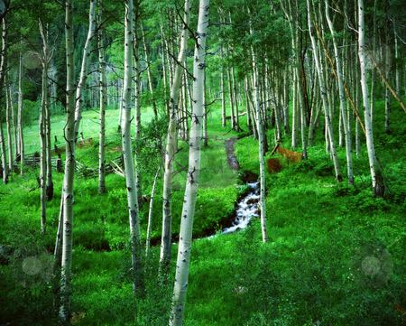 Aspen Grove and Ranch, Maroon Bells Wilderness Area, Colorado stock photo, Classic Rocky Mountain scene in spring. Aspen Grove and Ranch with spring creek, Maroon Bells Wilderness Area, Colorado. Great for nature, wilderness, adventure, exploration, travel, tourism, backcountry and outdoor recreation themes. 16bit / 100mg scans from 4x5 transparency. by Jeff DeMent