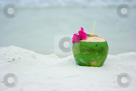Coconut on the beach stock photo, Coconut on the sandy beach in Thailand by Dmitry Rostovtsev