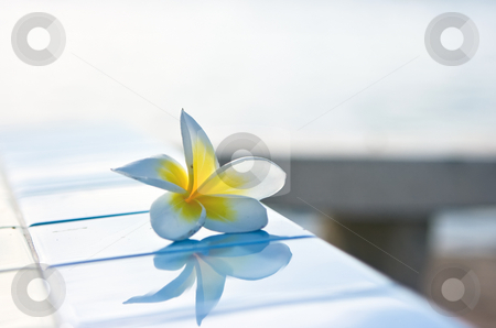 Temple tree flower stock photo, Temple tree flower with reflection on tiles by Dmitry Rostovtsev