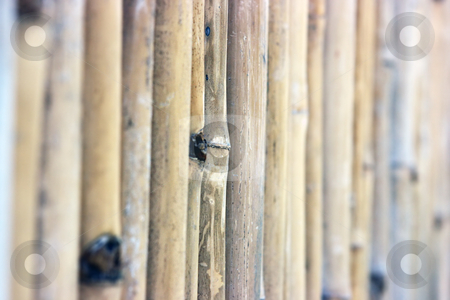 Bamboo fence stock photo, Fence made of bamboo sticks by Dmitry Rostovtsev
