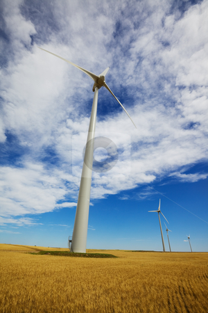 Wind power stock photo, Wind turbines in a wheat field with blue sky and clouds by Steve Mcsweeny