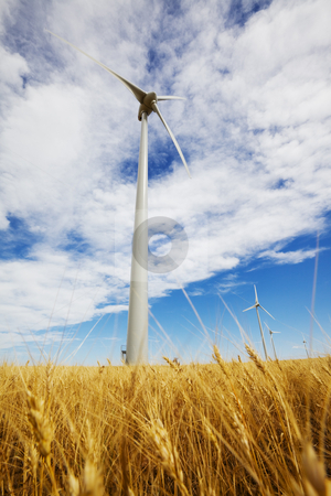 Alternative power stock photo, Wind turbines in a wheat field with blue sky by Steve Mcsweeny
