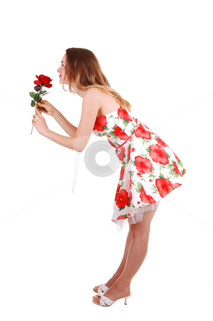 Woman standing in studio. stock photo, Lovely young woman in high heels standing in the studio with a red rose, long  brown hair, shooing her nice legs. On white background. by Horst Petzold