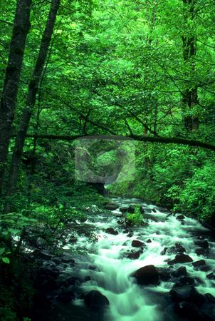 Bridal Veil Falls Creek stock photo, USA, Oregon, Mt. Hood National Forest, Bridal Veil Falls Creek by David Ryan