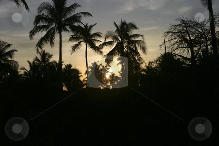 235 Sunrise in Saadani National Park stock photo, Beautiful Sunrise in Tanzania Africa by Sharron Schiefelbein
