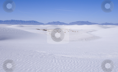 Tracks across the white sand stock photo, White Sands National Park in New Mexico USA by Sharron Schiefelbein
