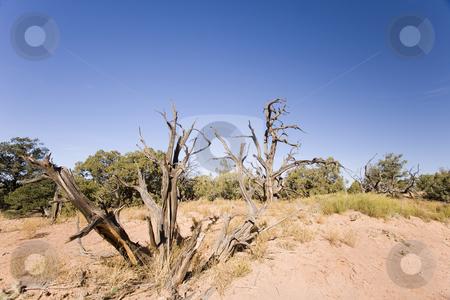 387 Desert scene stock photo, Dead tree in the desert in Uath by Sharron Schiefelbein