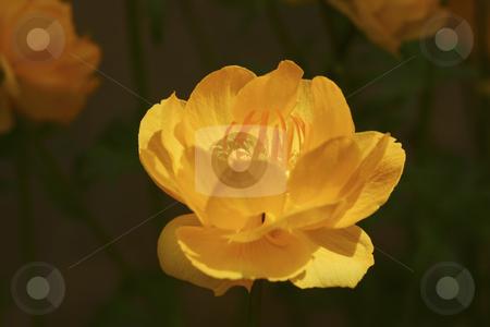 Flower stock photo, Flower at sunset by Sharron Schiefelbein