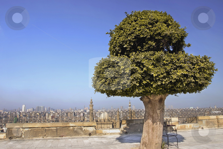 265 On top of the Citadel looking at Cairo stock photo, Beautiful tree at the edge of wall of the Citadel over looking Cairo Egypt by Sharron Schiefelbein