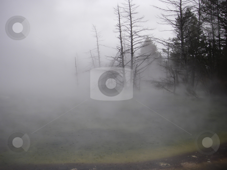 Steaming Geyser on a cold day stock photo, Winter scene of a geyser in Yellowstone National Park by Sharron Schiefelbein