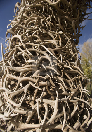401 Stack of Antlers from the Elk reserve stock photo, Stack of Antlers from the Elk reserve by Sharron Schiefelbein