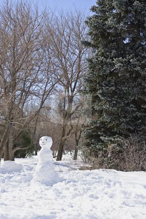 Snow man in the park stock photo, An armless snowman built in a park around tree by Yann Poirier
