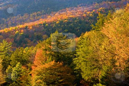 Autumn Light stock photo, Early evening light shining on autumn scene by Marianne Dent