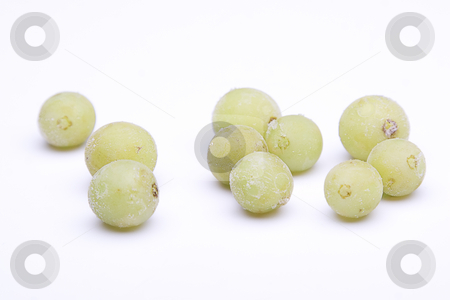 Frozen grapes stock photo, Isolated green grapes with frost deposit by Yann Poirier