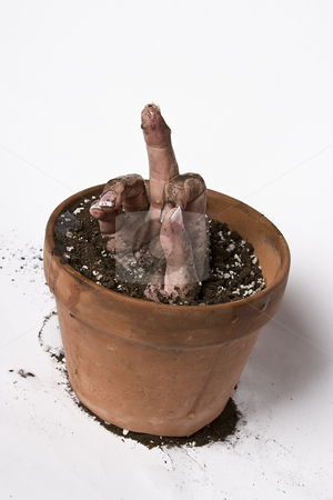 Dirty gesture stock photo, Women hand coming out of a pot of earth doing a rude gesture by Yann Poirier