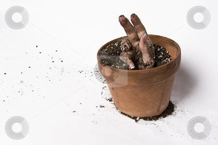 Growing hand stock photo, Women hand coming out of a pot of earth by Yann Poirier