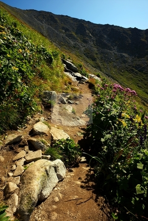 Hiking mountain path with flowers stock photo, Hiking walking path with stones in mountains with some flowers and grass around by Juraj Kovacik