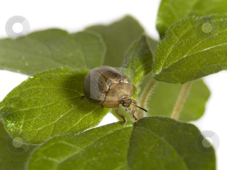 Bug on a plant stock photo, Bug walking on a green plant over white background. by Ignacio Gonzalez Prado
