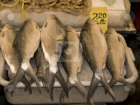 Market groceries stock photo, A row of fresh fish over crushed ice. by Ignacio Gonzalez Prado