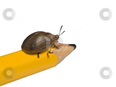 Bug on a pencil stock photo, Bug on a pencil isolated on white. by Ignacio Gonzalez Prado
