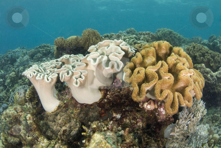Philippine Coral Reef stock photo, Coral reef seascape in the South China Sea near the island of Cebu, Philippines. by A Cotton Photo