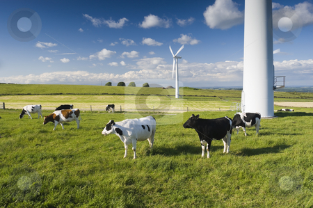 Dairy Cow stock photo, Dairy cows in a field in front of wind turbines Yorkshire England by Stephen Meese