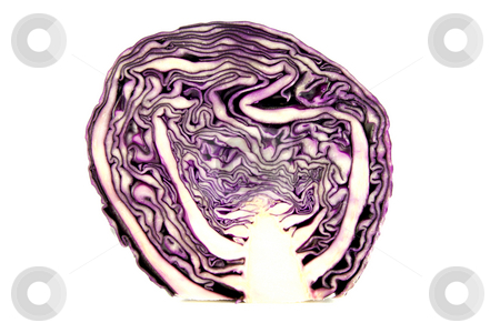 Red Cabbage stock photo, Red cabbage cut in half on a white background by Keith Wilson