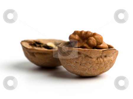 Walnut stock photo, Single opened walnut close up on white background. by Ignacio Gonzalez Prado