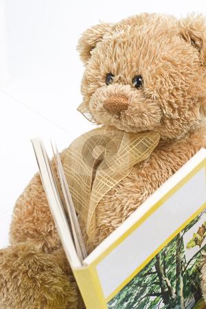 Teddy bear reading stock photo, Small teddy bear reading a book about trees by Yann Poirier