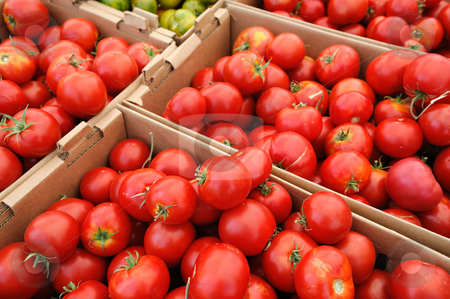 Summer Tomatoes stock photo, Boxes of bright red tomatoes ready for sale at a farmers market by Lynn Bendickson