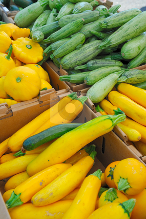Yellow Squash stock photo, Different variaties of summer squash in boxes for sales at the farmers market by Lynn Bendickson