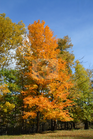 Fall colors stock photo, Fall colors, Rochester, New York by Harris Shiffman