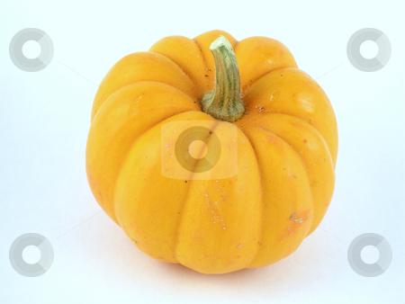 Pumpkin stock photo, Miniature pumpkin by Harris Shiffman