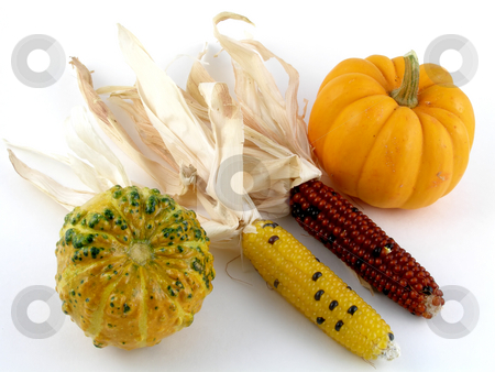 Harvest medley stock photo, Harvest medley - Indian corn, pumpkin, gourd by Harris Shiffman