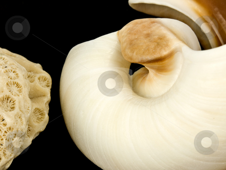 Sea shell and coral stock photo, Sea Shell and Coral on a black background by John Teeter
