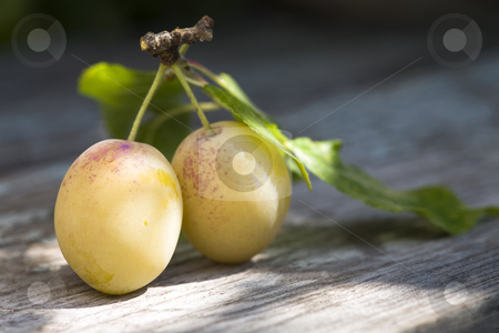 Yellow plums on a table stock photo, two ripe yellow plums on a wooden table, close-up image by Valery Kraynov